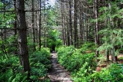Blackbird Trail